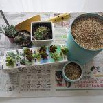 多肉植物の寄せ植え方法!初心者にもわかりやすく説明します。