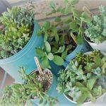 初心者の私がおすすめする育てやすい多肉植物10選!寄せ植えも簡単
