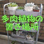 多肉植物の置き場所にキャスター付きメタルラックが使える