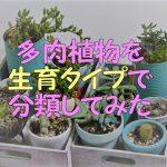 多肉植物の生育タイプを分けてみた!これで水やりや管理が楽になる