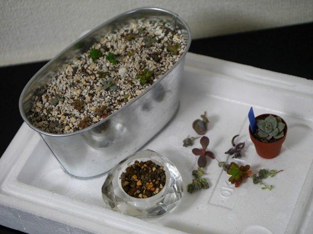 多肉植物のちまちま寄せの材料