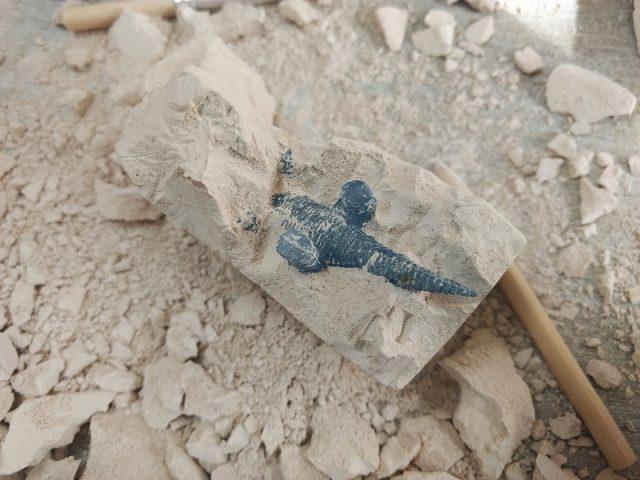 セリアの恐竜発掘フィギュア